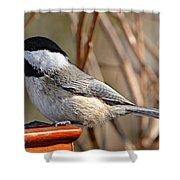 Hungry Chickadee  Shower Curtain
