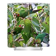 Hungry Chiriqui Conures Shower Curtain