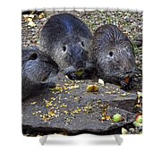 Hungry Critters Shower Curtain