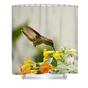 Hungry Flowerbird Shower Curtain