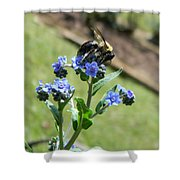Hungry For Pollen Shower Curtain
