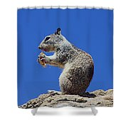 Hungry Ground Squirrel Shower Curtain