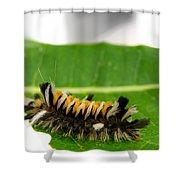 Hungry Hairy Caterpillar Shower Curtain