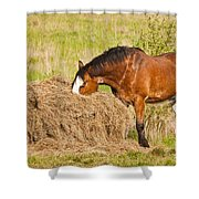 Hungry Horse Shower Curtain