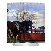 Hungry Horses Shower Curtain