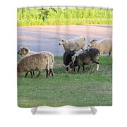 Hungry In Life  Shower Curtain