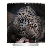Hungry Leopard Shower Curtain