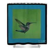 Hungry Little Hummingbird 6 Shower Curtain