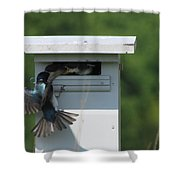 Hungry Nestling. Shower Curtain