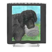 Hungry Newfoundland Dog Canine Animal Pets Art Shower Curtain