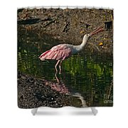 Hungry Pink Spoonbill Shower Curtain