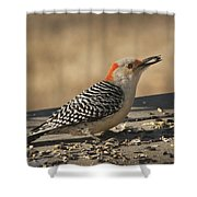 Hungry Red-bellied Woodpecker - Melanerpes Carolinus Shower Curtain