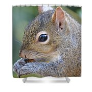 Hungry Squirrel Shower Curtain