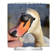 Hungry Swan Shower Curtain