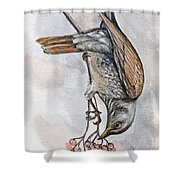 hungry Thrush 1 Shower Curtain