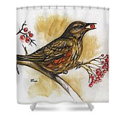 Hungry Thrush Shower Curtain