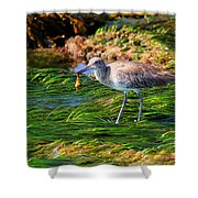 Hungry Willet Shower Curtain