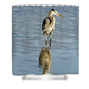 Hunting Great Blue Heron Shower Curtain