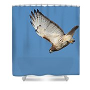 Hunting Hawk Shower Curtain