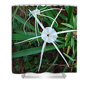 Hurricane Lilly Shower Curtain
