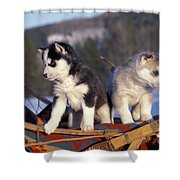 Huskies On A Sled Shower Curtain