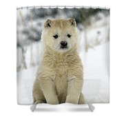 Husky Dog Puppy Shower Curtain