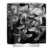 Hyacinth In Black And White Shower Curtain