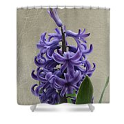 Hyacinth Purple Shower Curtain