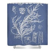 Hyalosiphonia Caespitosa Okamura Shower Curtain by Aged Pixel