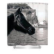 Hydra Horse Shower Curtain
