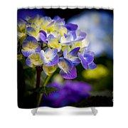 Purple Blue Hydrangea, Corona Del Mar California Shower Curtain
