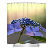 Hydrangea Umbrella Shower Curtain
