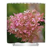 Hydrangea Valentine Shower Curtain