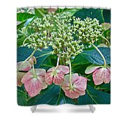 Hydrangea With A New Look Shower Curtain