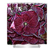 Hydrangeas In Rich Rose Color Shower Curtain