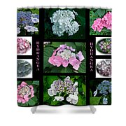 Hydrangeas On Parade Shower Curtain