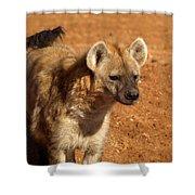 Hyena Shower Curtain
