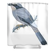 Hypocoly Shower Curtain