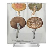 Hypodendrums Fagi And Queris Shower Curtain