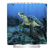I Am A Proud Hawksbill Turtle Shower Curtain