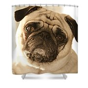 I Can Be Your Lovebug Shower Curtain by Trish Tritz