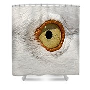 I Have My Eye On You Shower Curtain