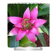 Pink And Beautiful  Shower Curtain