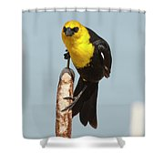 I Mean You Shower Curtain