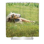 I Need A Tan  Horse Shower Curtain