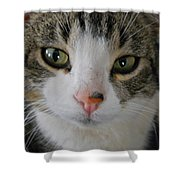 I See You Cat - Square Shower Curtain