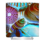 I Sell Seashells Down By The Seashore Shower Curtain