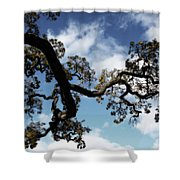 I Touch The Sky Shower Curtain by Laurie Search