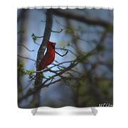 I Want To Sing A Song To You Lord Shower Curtain