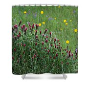 I55 Eye Candy Shower Curtain